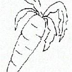 фрукты7